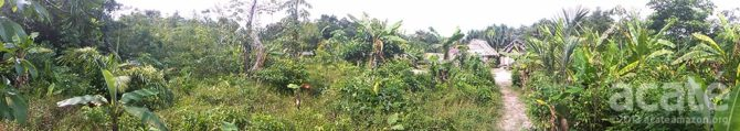 peru permaculture agroforestry site amazon