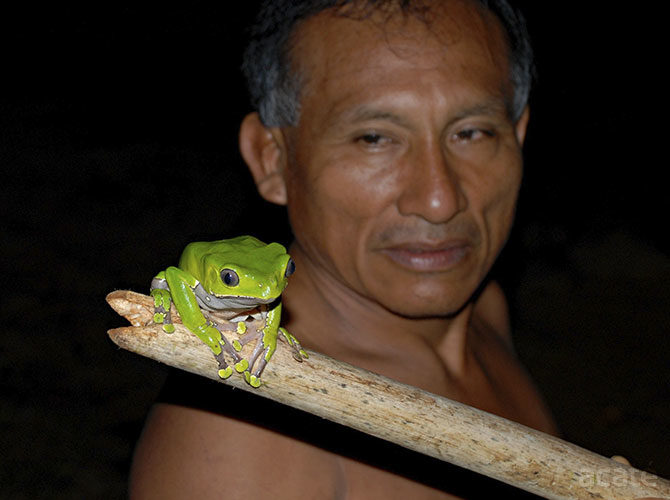 Giant Monkey Tree Frog with Matse Elder, Antonio