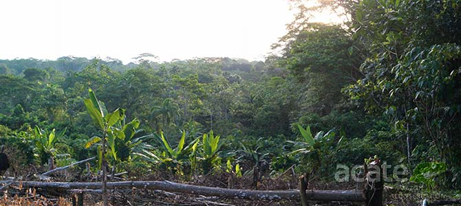 rainforest clearcutting in Mazan Loreto Peru photo