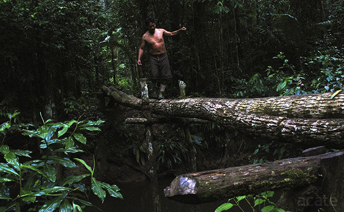 log crossing in amazon rainforest