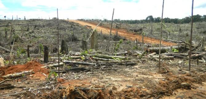 deforestation in Tamshiyacu for palm oil plantation La Región