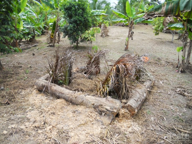 leaf baskets protecting young plants matsés territory perú