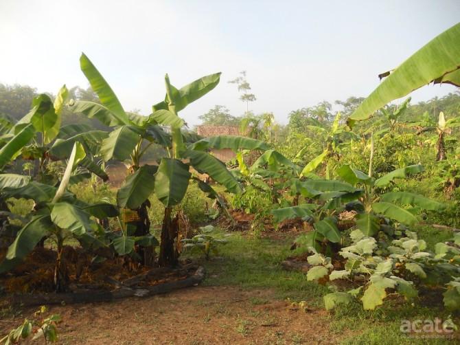 Matsés farm in Estirón