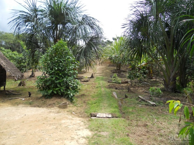 Matsés permaculture farm in Estirón, Peru