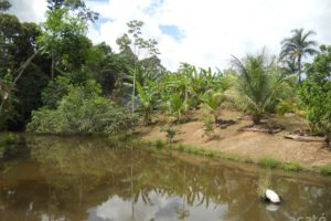 Matsés permaculture farm and fish pond in Estirón, Perú
