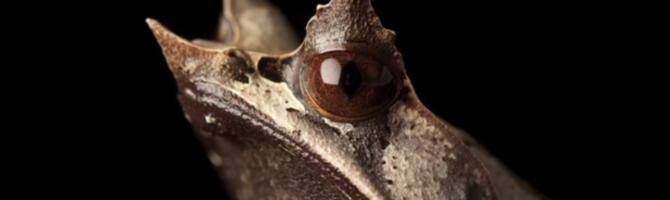 endangered frog joel sartore