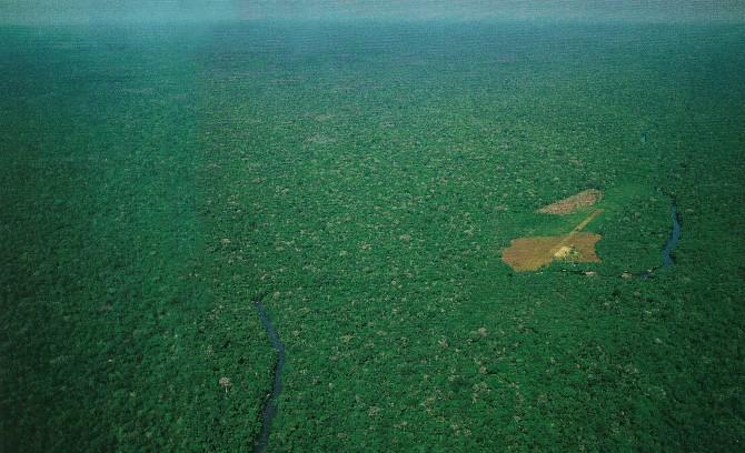Amazon rainforest.