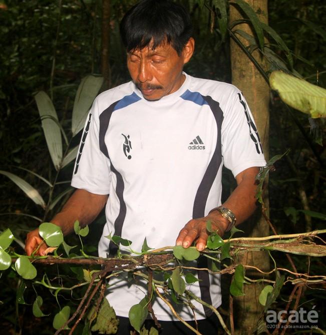 Matsés shaman and medicine man