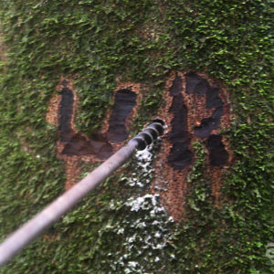 marked copaiba tree tapping resin