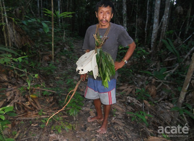 lucho matsés shaman collecting medicinal plants