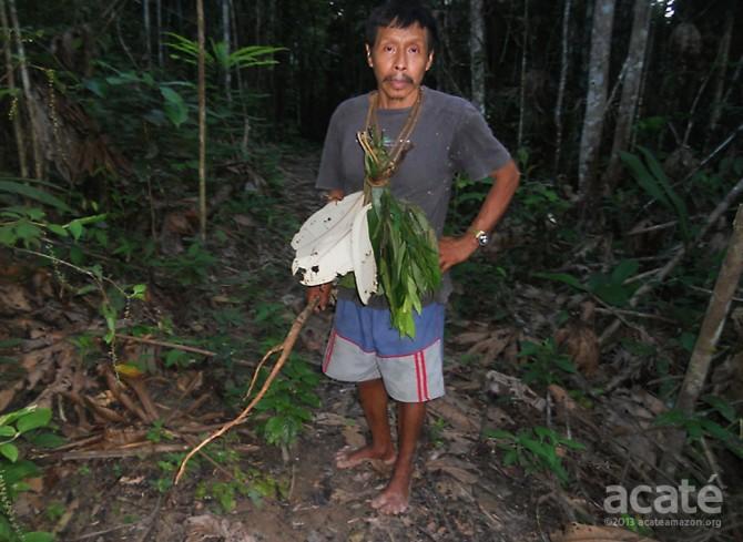 lucho matsés shaman collecting medicinal plants