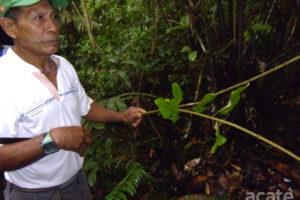 Traditional medicinal plants amazon rainforest