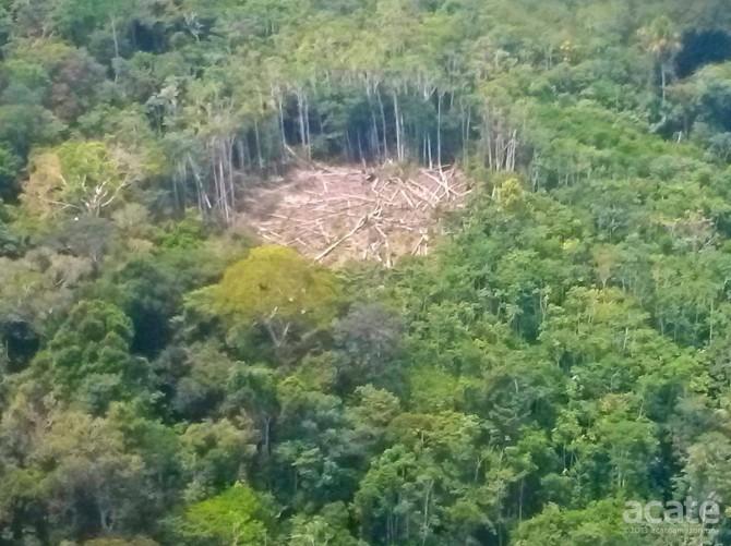 Amazon clear cut farm Matsés