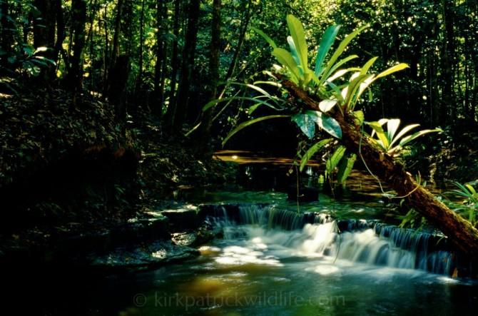 Anthurium over Rio Tahuayo ©kirkpatrickwildlife.com