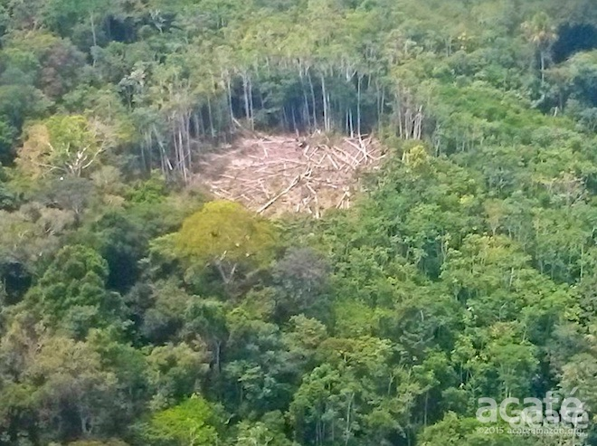 cleared amazon rainforest for swidden agriculture