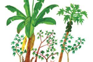 Matsés swidden with plantains, manioc, and papayas, drawn by Matses artist Guillermo Nëcca Pëmen Mënquë