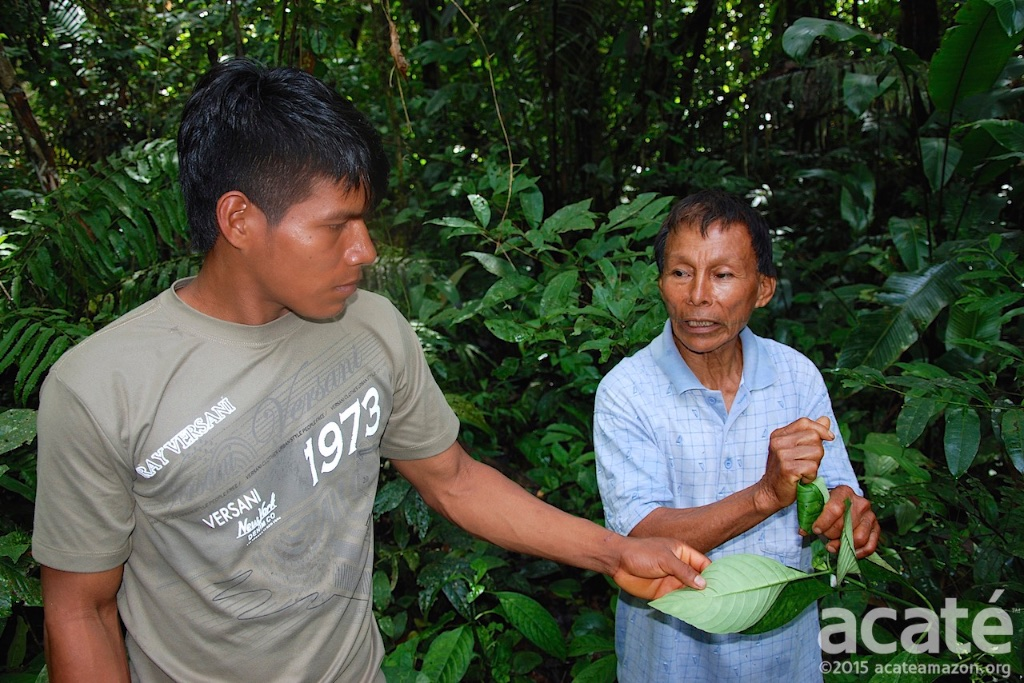 Matsés elder shaman Cesar teaching apprentice in Esitrón.
