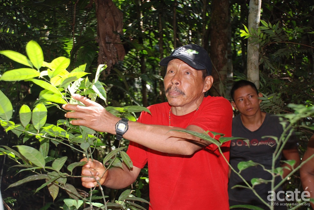 Apprentices with Lucho in Healing Forest in Remoyacu.
