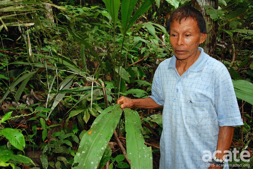 cesar shaman matsés amazon rainforest medicinal plants