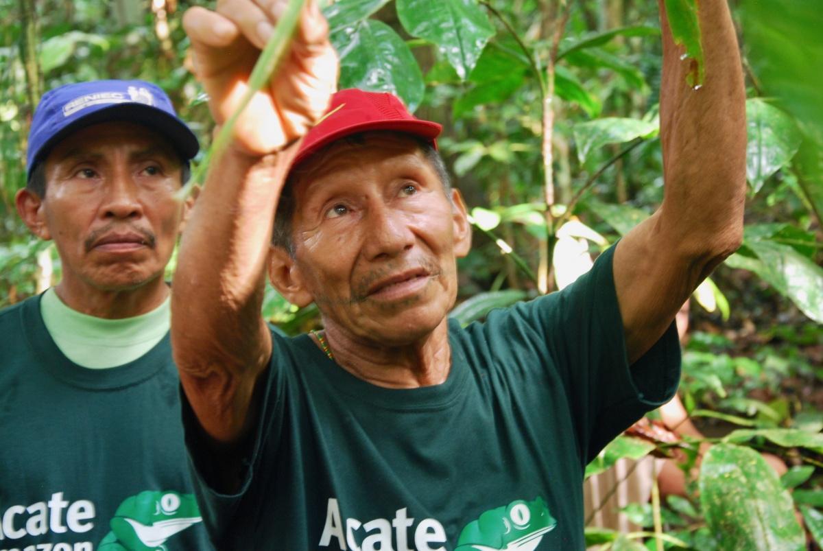 shaman healing forest