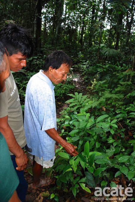 shaman leading