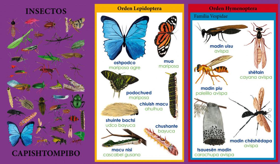 Excerpt from taxonomic encyclopedia
