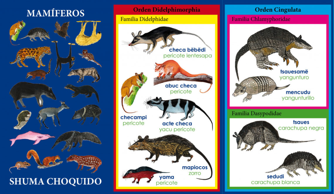 Excerpt from taxonomic encyclopedia