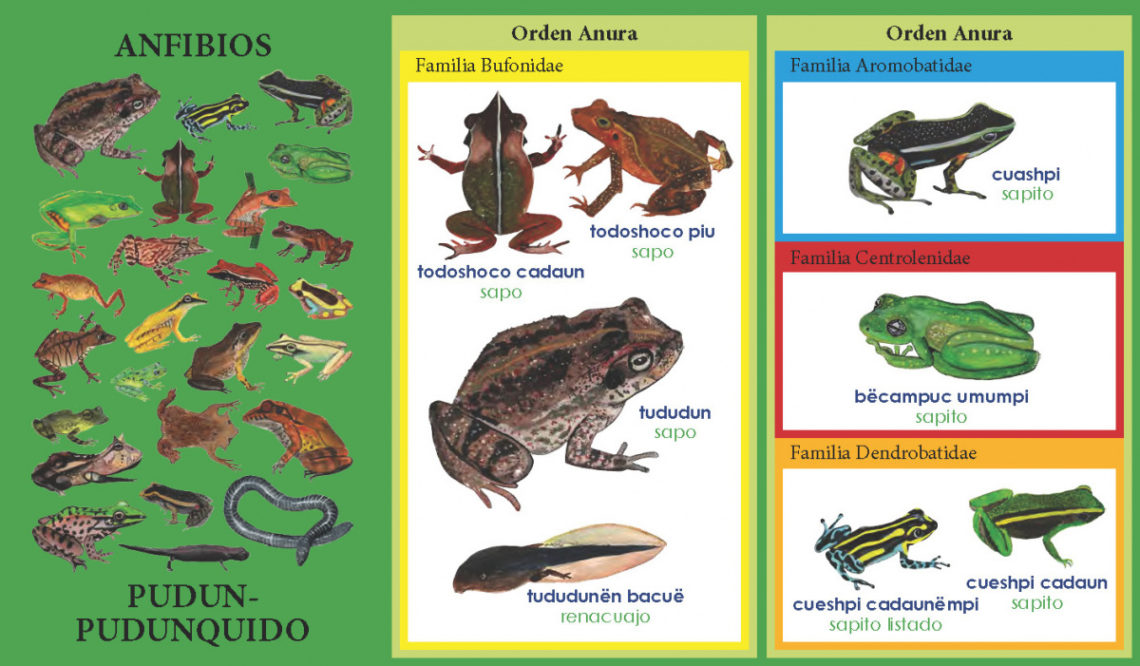 taxonomic encyclopedia