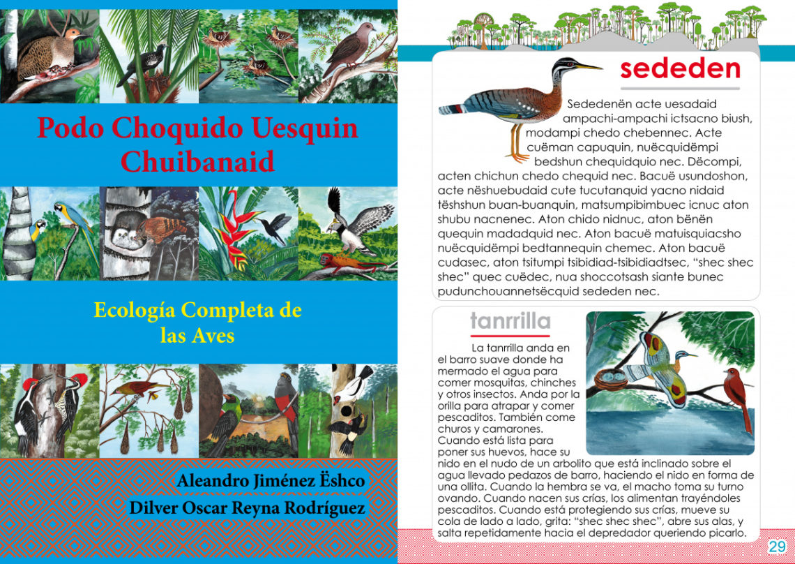 Matsés bird ecology