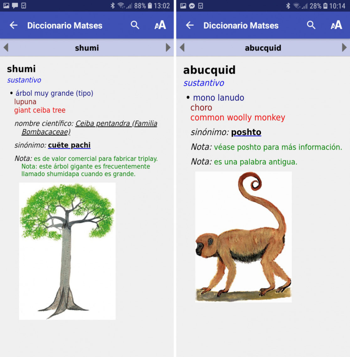 matsés dictionary app